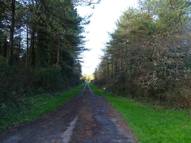 Track into Penybedd Wood