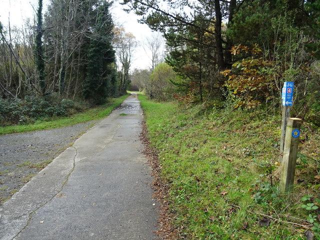 Concrete track through Pembrey Forest