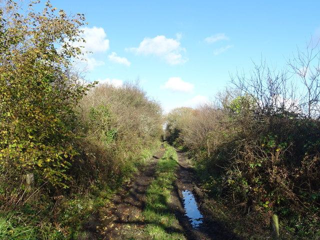 Farm track at Pant-Teg