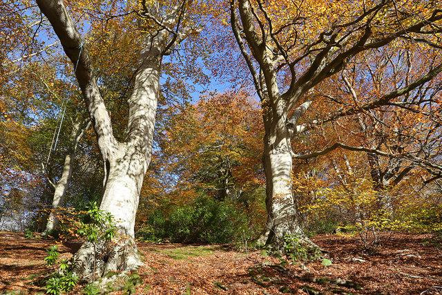 Langlee Woods, Galashiels