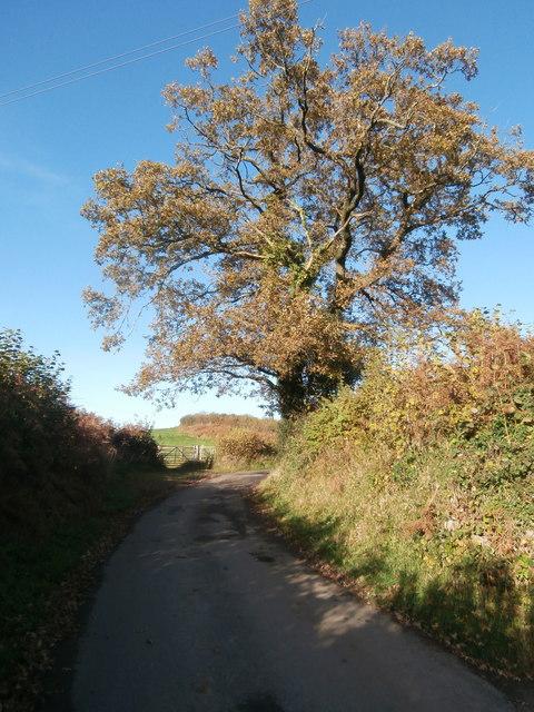 Lane north of Rhiwsaeson