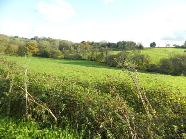 Pasture near Rhiwsaeson