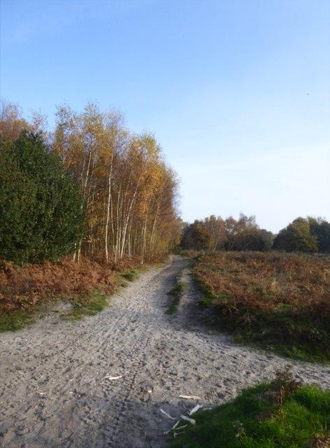 Early November on Headley Heath