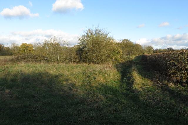Trees round a field pond