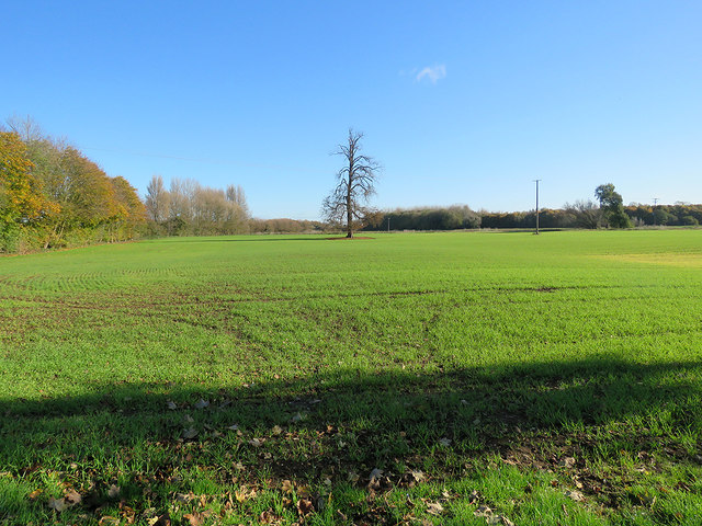 An autumn-sown field near Ley Grove Cottages
