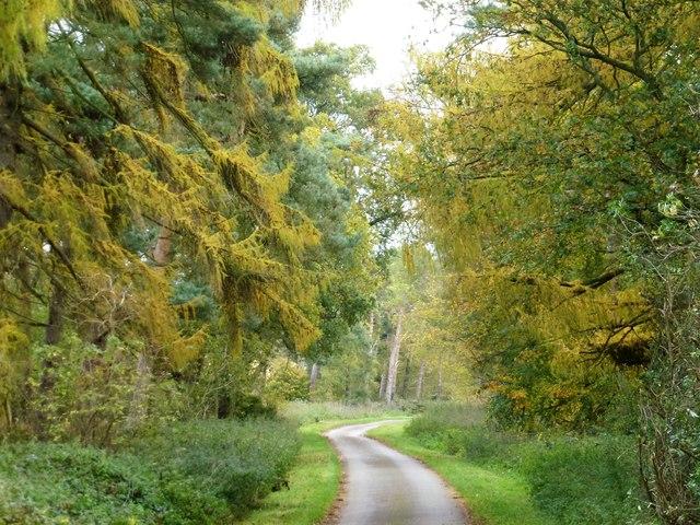 Appleton Drove near West Newton, Norfolk
