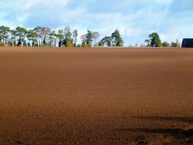 Farmland in Autumn sunshine