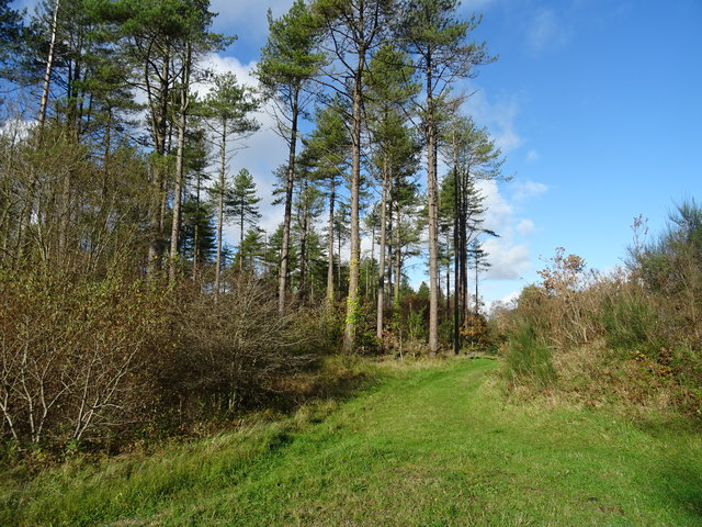 Green track in Pembrey Forest