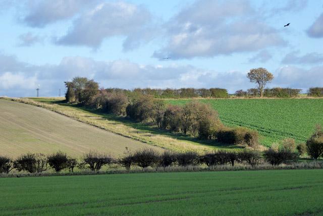 Hillside hedgerow north of Wallington Road