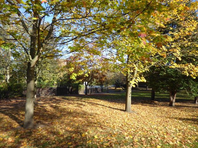 Autumn colours on Plumstead Common