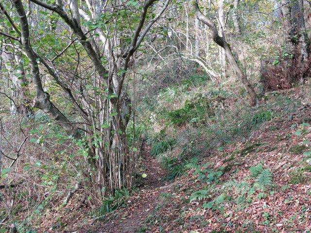 Footpath in Graham's Wood
