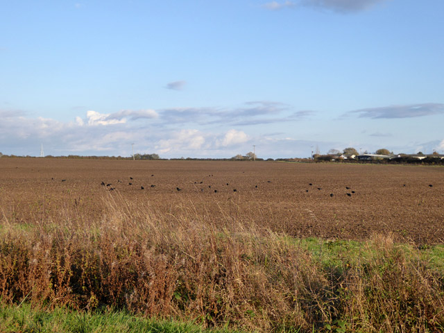 Brown field west of Swavesey