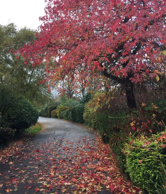 Shrub border with a colourful tree, St Nicholas Park, Warwick