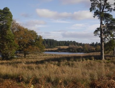 NN6103 : Scattered pines by Loch Rusky by Richard Webb