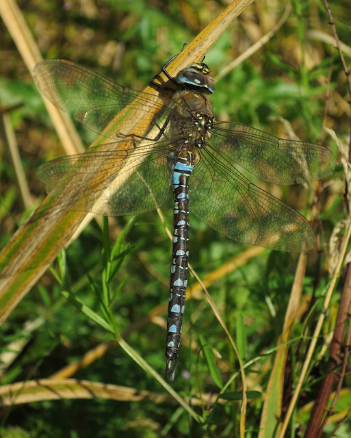 November dragonfly by West Cambridge Lake