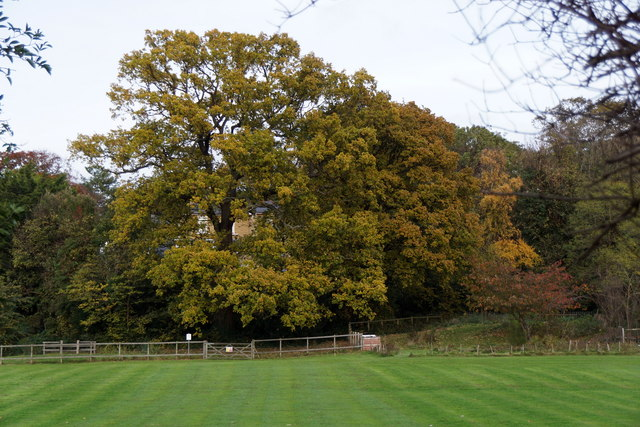 Autumnal trees, Bromley