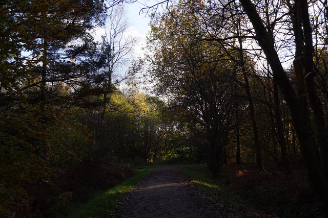 Track in Alice Holt Forest