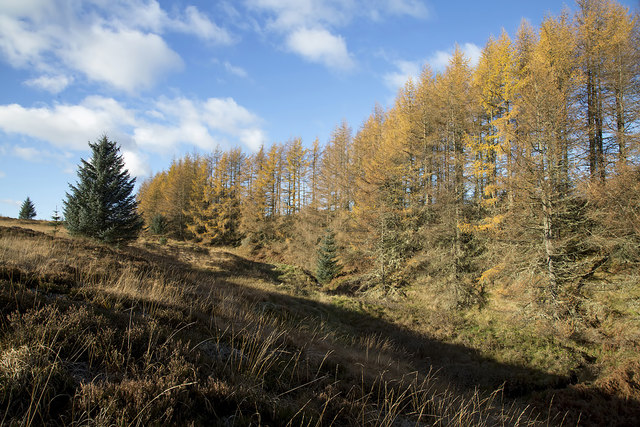 A woodland edge at Wester Alemoor