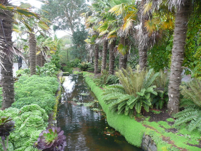 Stream between palms, Logan Botanic Garden