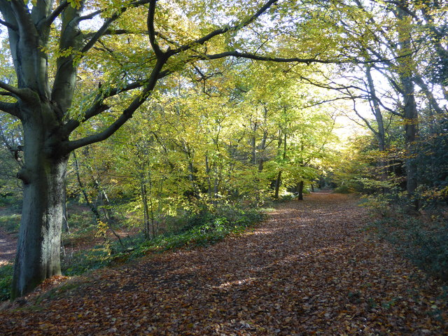 Chislehurst Common in autumn