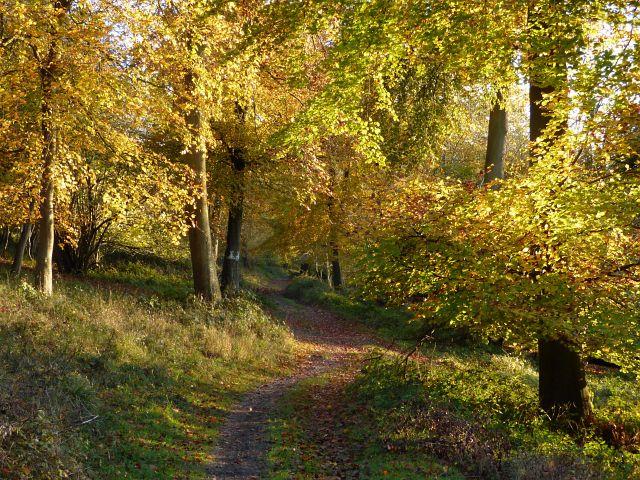 Woodland, Lewknor