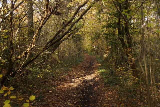 Footpath in Limekiln Wood, Oxshott