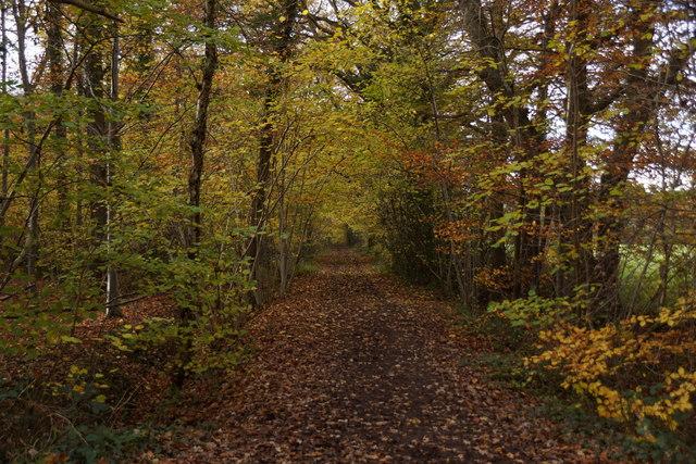 Birchwood Lane, Oxshott