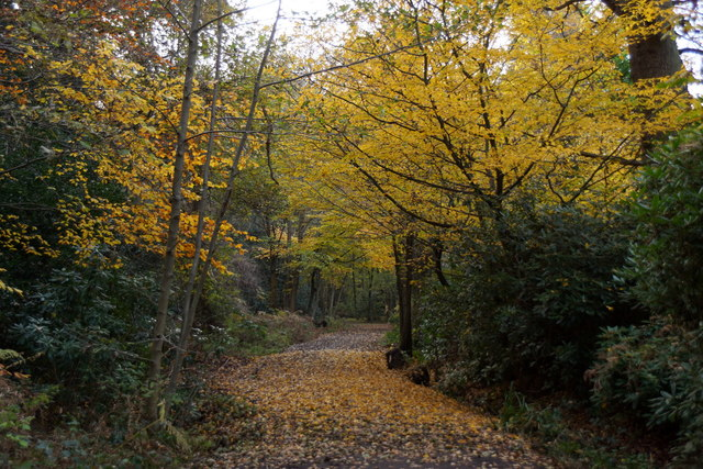 Path on the northern edge of Esher Common