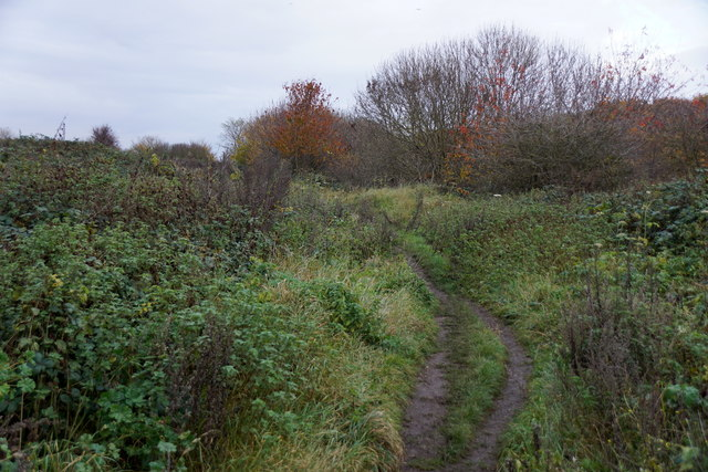 Path on Molesey Heath Nature Reserve