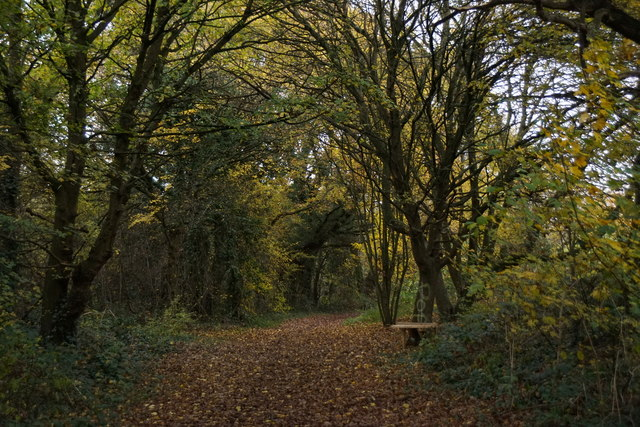 Footpath on Molesey Heath Nature Reserve