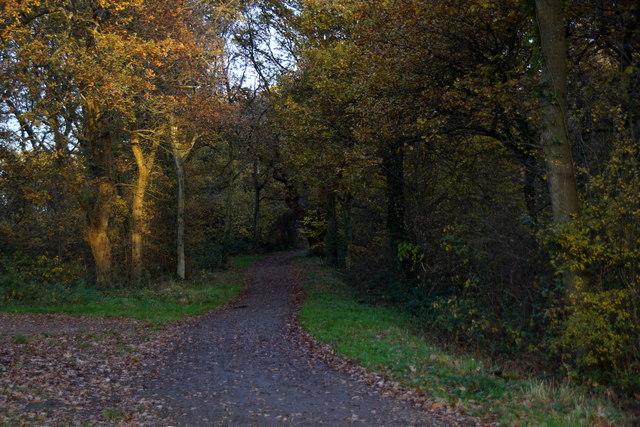 Path on Ashtead Common