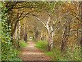 SJ6367 : Whitegate Way west of Grange Lane by Stephen Craven