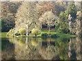 ST7733 : Reflections in Garden Lake, Stourhead Gardens by Philip Halling