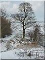 TA1333 : Logland Nature Reserve, Kingston upon Hull by Bernard Sharp