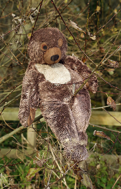 A discarded bear at a woodland edge near Redpath