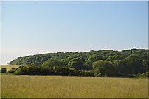 SP4609 : Wytham Woods by N Chadwick