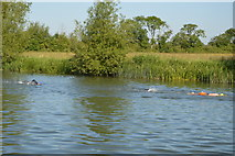 SP4610 : Openwater swimmers, River Thames by N Chadwick