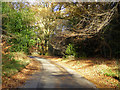 SP8400 : A woodland lane by Robin Webster