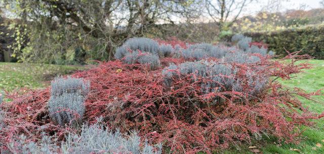 Kitchen Garden, Kenwood, Hampstead Heath