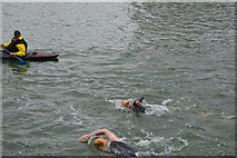 TQ4080 : Openwater swimmer, Victoria Dock by N Chadwick