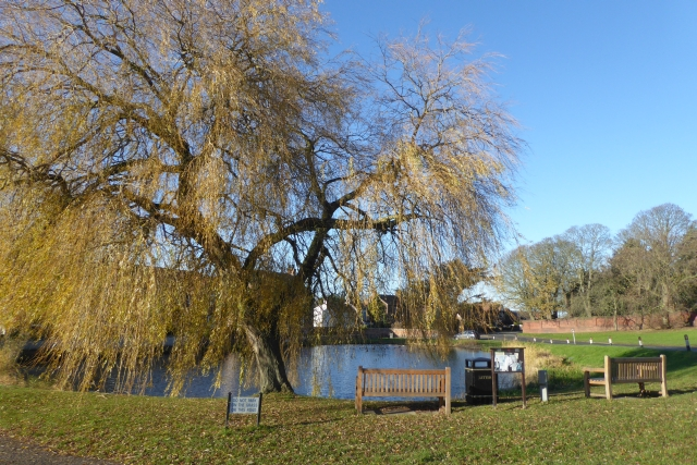 Autumnal willow beside the pond