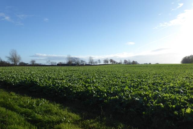 Farmland off York Road