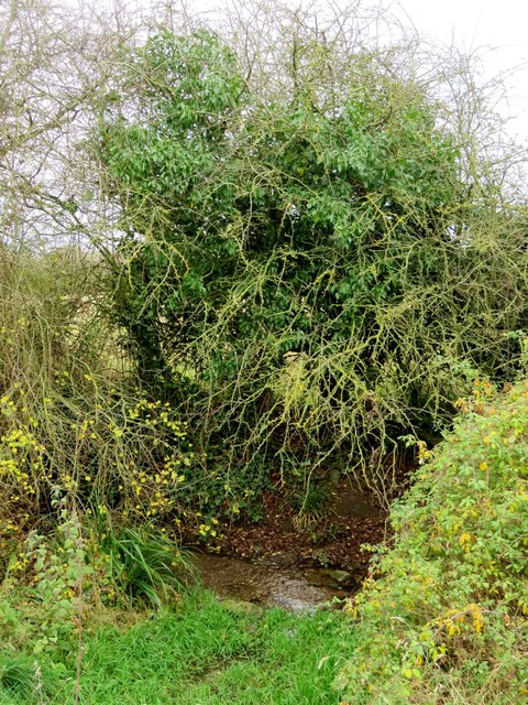 A ditch by the hedge