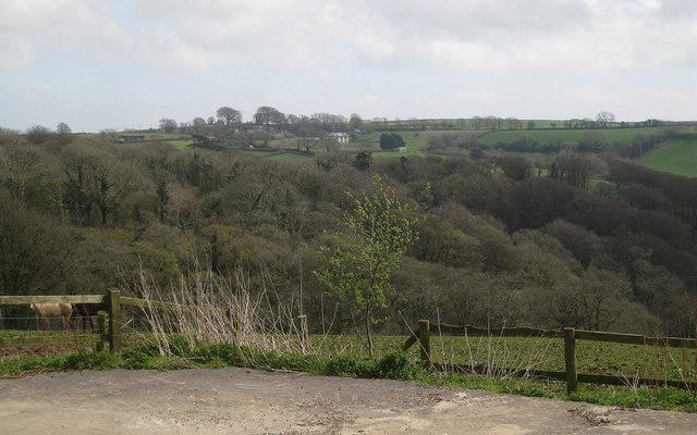 Collaford Wood, east of Blackawton