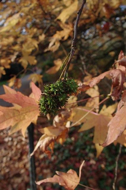 Autumn Colours in Battersea Park