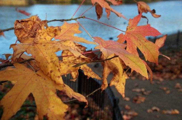 Autumn Leaves in Battersea park
