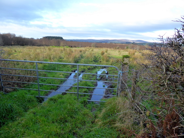 Rough ground, Loughmacrory