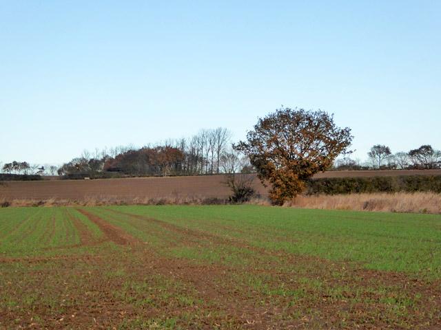 Farmland west of Layer Breton