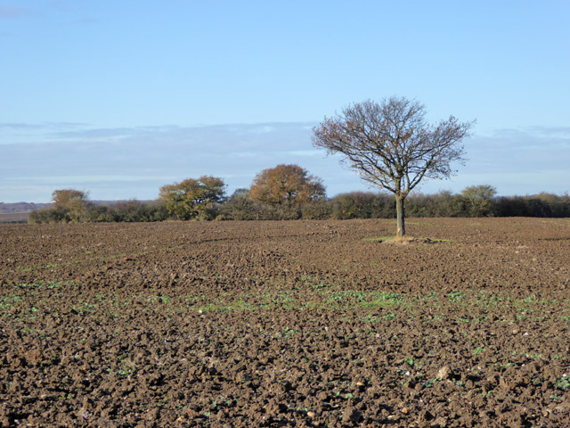 Ploughed field with tree, Great Wigborough