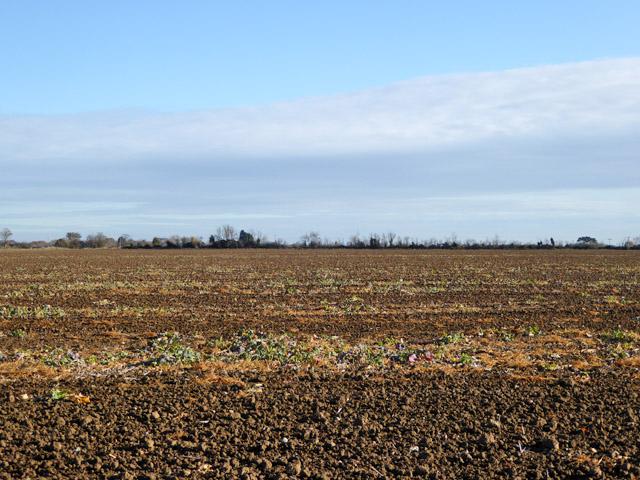Cultivated field, Mersea Island